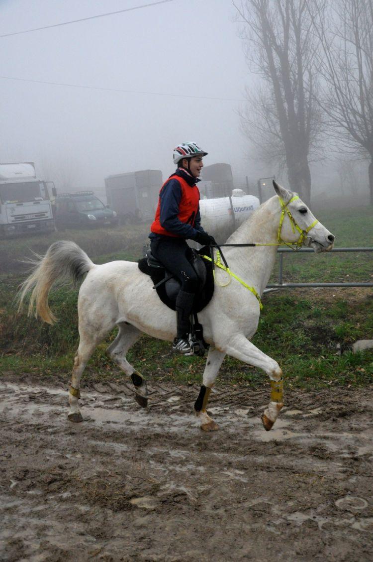 cavallo endurance