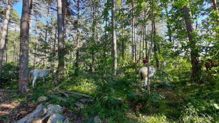 campo cavallo in pineta