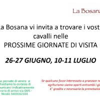 15-16 MAGGIO - WEEKEND DI VISITA CAVALLI A RIPOSO