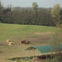 Il recinto degli stalloni