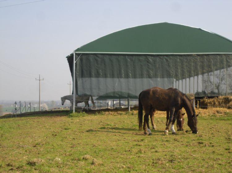 I cavalli possono uscire quando vogliono